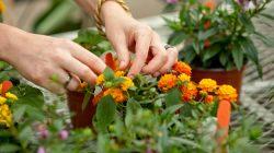 Mengenal Lebih Jauh Mengenai Macam Jenis Tanaman Hortikultura