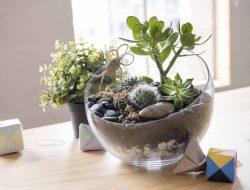 Wujudkan Suasana Indah dan Alami dengan Dekorasi Terarium Kaktus