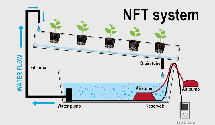 Sayuran Hidroponik menggunakan NFT System