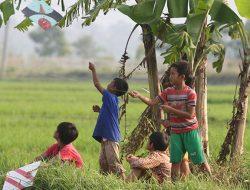 Konsep Sistem Pertanian Ramah Lingkungan