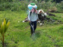 Menyemprotkan racun rumput