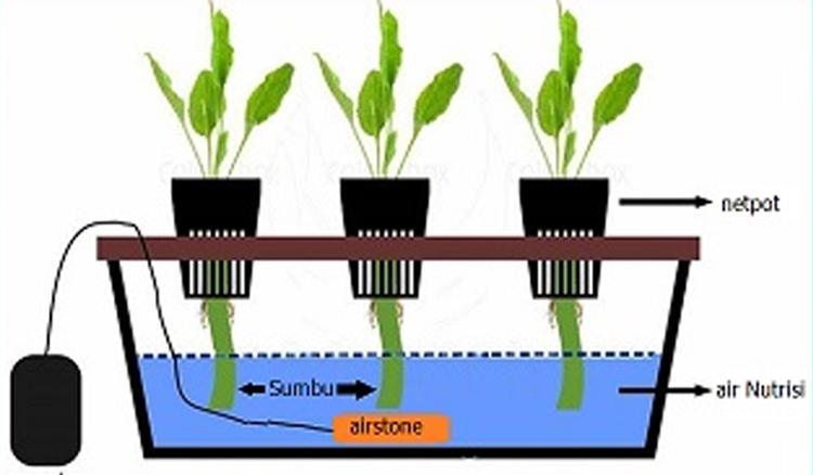 Skema Sayuran Hidroponik sistem WICK
