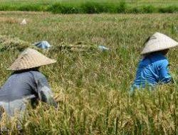 May Day: Buruh Tani Butuh Reforma Agraria, Bukan Bagi-Bagi Sertifikat