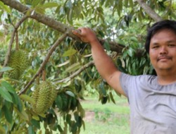 Petani Asal Malaysia Sukses Tanam Durian di Australia, Bagaimana Ceritanya?