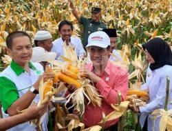 Hadir Panen Jagung di Probolinggo, Mentan: Bulog Harus Membeli Jagung Petani
