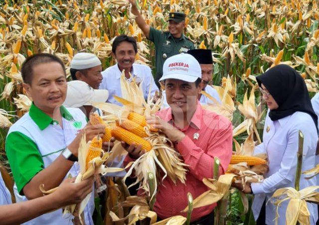 Mentan panen jagung (foto: humas kementan)