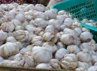ilustrasi: Bawang putih impor di pasar
