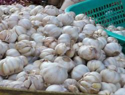 5 Fakta Dibalik Impor Bawang Putih Di Indonesia
