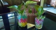 tanaman hidrogel
