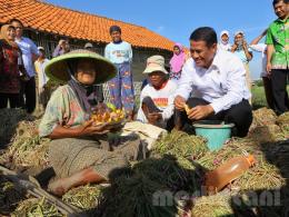 Menteri pertanian bercengkrama dengan petani di pedesaan (dok: Kementan 2019)