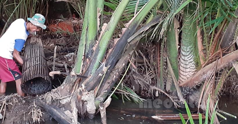 Pentingnya Konservasi Sagu di DAS Rongkong