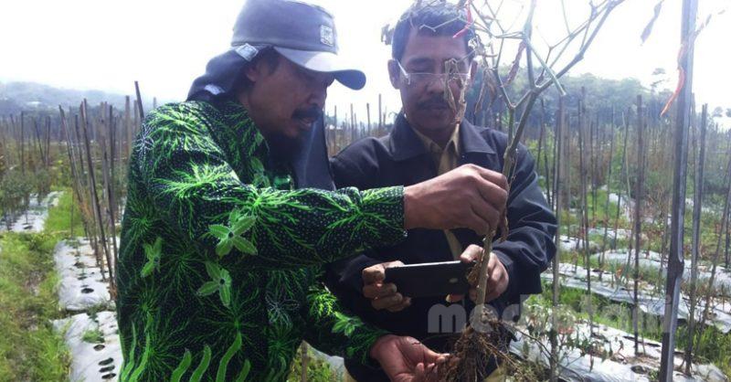 Tim Petugas Pengawas Organisme Pengganggu Tanaman (POPT) Dinas Pertanian Magetan