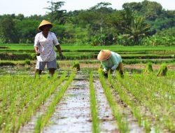 Undang-Undang Sistem Budidaya Pertanian Berkelanjutan Ditetapkan, Koalisi Petani Siapkan Uji Materi
