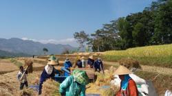petani kerja bakti