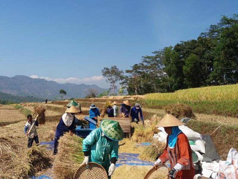 Ilustrasi: Petani gotong royong dalam memanen padi di sawah (Sumber: waru.desa.id)
