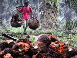 Petani dan Buruh Sawit Juga Butuh Bantuan Sembako