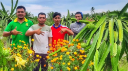 petani milenial buah naga
