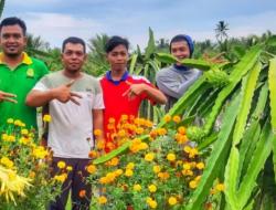 Buah Naga Petani Milenial Tembus Pasar Malaysia