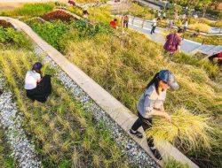 Inovasi Pertanian Jawab Dilema Milenial