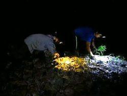 Petani Vietnam Nekat Bertani di Malam Hari, Ada Apa?