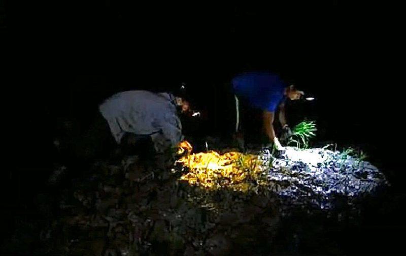 Hindari Panas Ekstrim, Petani Vietnam Menanam di Malam Hari