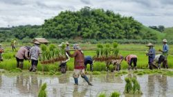 Rice Farmers, Thailand by Florent C