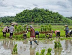 Inilah 10 Alasan Kenapa Pertanian Indonesia Tertinggal dari Thailand