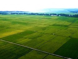 Indonesia Negara dengan Pertanian Terbaik Dunia. Benarkah?