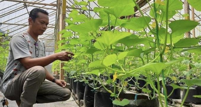 Mantan TKI, Anton Supriyono (40) kini jadi konsultan pertanian