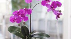 Pinteret: Orchid Flower