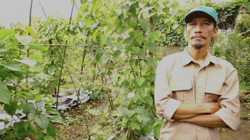 Luki Lukmanulhakim, sukses membudidayakan Sacha Inchi yang meruakan tanaman asli Hutan Amazon