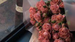 Mawar merah muda (pinterest)