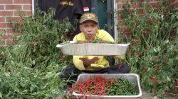 Pemilik Haiqal's Garden, Syarif Syaifullah, warga negara Indonesia di Philadelpia Amerika