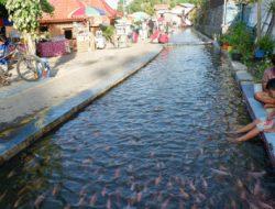 Berkat Pemuda Yogya, Irigasi yang Dulu Kumuh Jadi Cantik dengan Ikan Koi