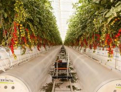 Pertanian Padang Pasir UAE, Apakah Solusi untuk Menghemat Air?