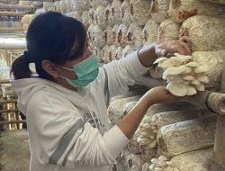 Tinggalkan Dunia Sepakbola, Ratu Tisha Bertani Jamur