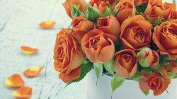 Mawar oranye (pinterest)