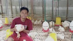 Abdul Rasyid Ridho, peternak milenial yang beternak ayam semi organik