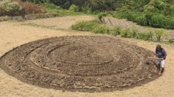 Ladang di Klaten berbentuk obat nyamuk