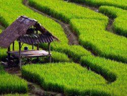 HIPMI Dorong Para Pengusaha Muda Terjun Langsung di Bisnis Pertanian