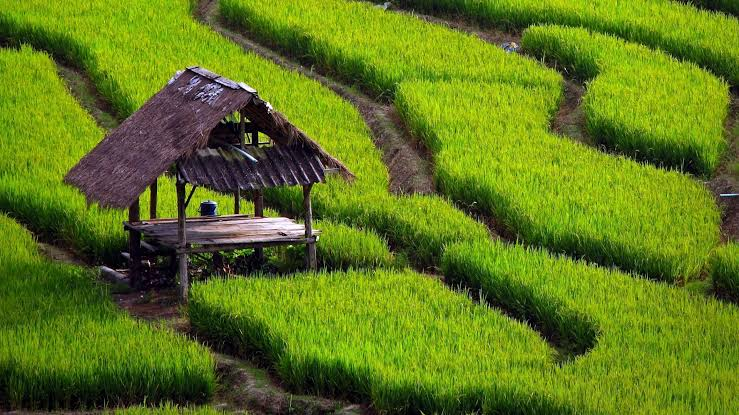 Ilustrasi: Pertanian Indonesia