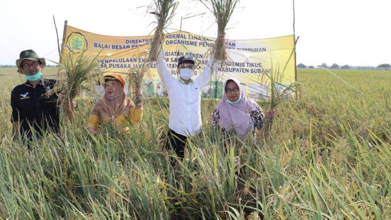 BBPOPT melakukan kunjungan di lokasi panen di Desa Pusakajaya