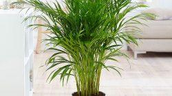 Pintereset: Tanaman palm