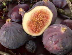 Masya Allah! Buah-buahan Ini Tercatat Spesifik dalam Al-Quran