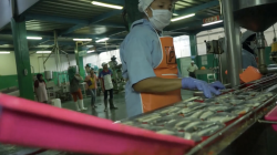 PPI terus melakukan usaha perdagangan berbagai produk