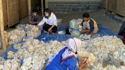 Ratu Tisha sedang menyortir hasil panen jamurnya bersama dengan beberapa pekerja lainnya.
