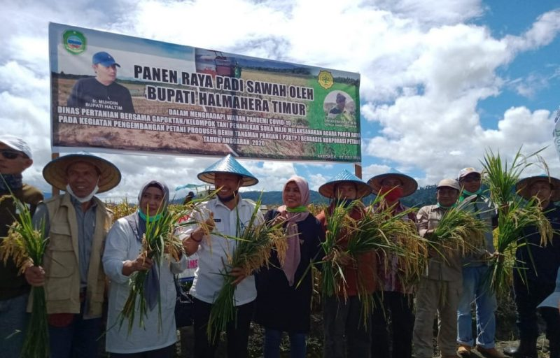 Panen perdana korporasi benih padi varietas Mekonggo