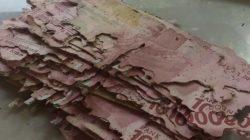 Uang dimakan rayap