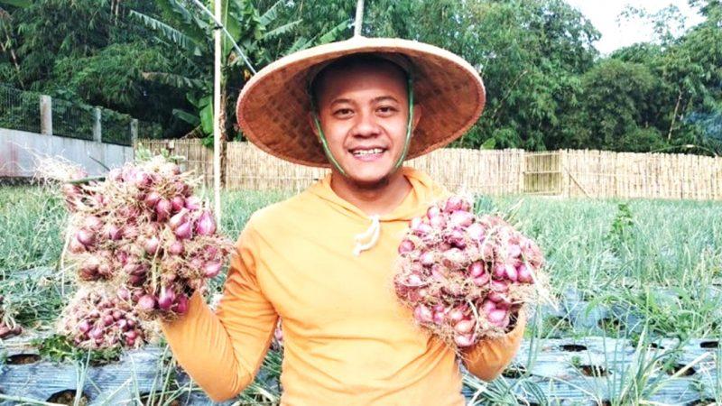 Panen bawang merah petani Sukabumi | Sumber Foto:Istimewa
