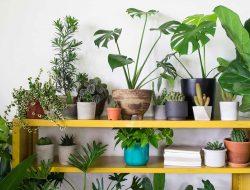 12 Tanaman Hias Ini Beri Keajaiban Pada Udara Di Rumah Anda